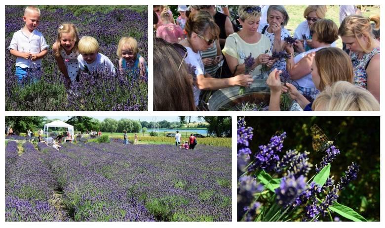 Już po raz trzeci wielbiciele lawendy spotkali się w Leszczach (gmina Złotniki Kujawskie), by wspólnie celebrować czas kwitnienia tego przepięknego ziela.Na