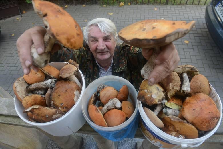 Sezon grzybowy 2016 czas zacząć? Można, jak najbardziej. Amatorów łatwych grzybowych zdobyczy ostrzegamy - wysypu grzybów na Dolnym Śląsku nie ma! Natomiast