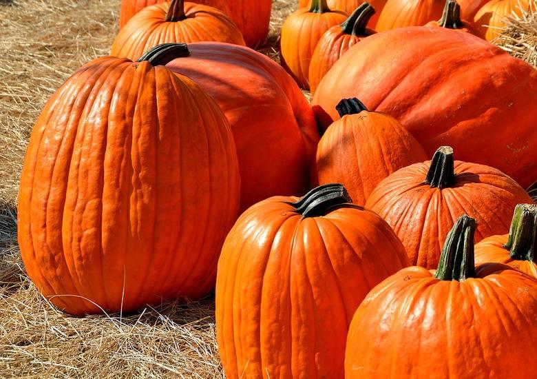 Jesień to sezon, w którym króluje dynia. Co zrobić z tym pomarańczowym warzywem? Poznajcie przepisy na dania, ale i naturalne kosmetyki, które możecie
