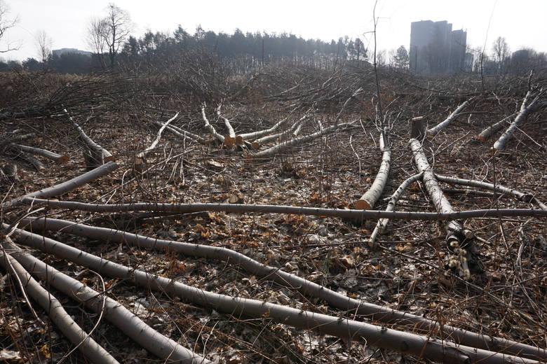 Wycinka drzew obok ul. Baraniaka<br />