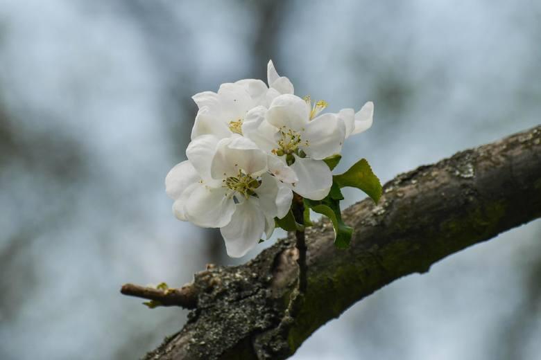 Ogród botaniczny UKW znajduje się teraz w pełnym rozkwicie. W tym roku królestwo flory wzbogaciło się o ścieżkę edukacyjną z roślinami cieniolubnymi.