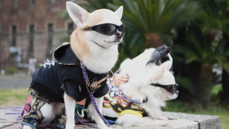 Psia moda - przesada czy wyraz miłości dla pupila? Te psie trendy podbijają internet