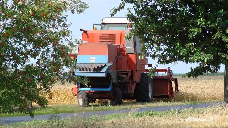 Żniwa w pełni. Rolnicy mają ręce pełne roboty - jedni pracują w kombajnach, inni zwożą plony. Jeśli chodzi o aurę w Kujawsko-Pomorskiem, w najbliższych