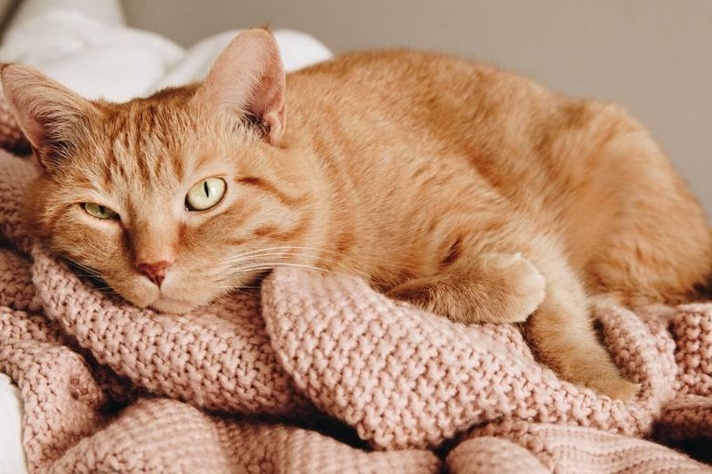 [b]Niestety, ale nasi najwięksi przyjaciele, czyli zwierzęta, nie są w stanie wyrazić słowami nam swojego uczucia. Sprawa ta wydaje się być jeszcze bardziej skomplikowana w przypadku kotów: mówi się, że chodzą one ścieżkami i nie czują więzi ze swoim właścicielem. To nie prawda! Kot też okazuje,...
