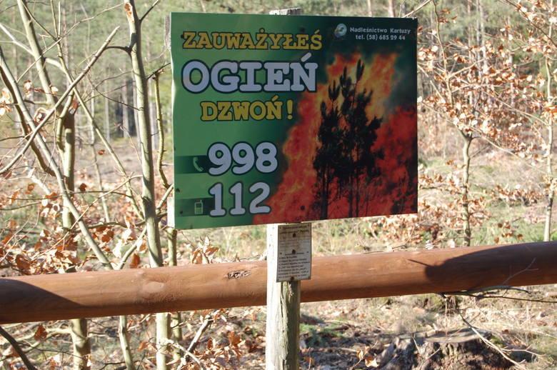 Zagrożenie pożarowe w lasach. Pomorskie lasy otwarte, ale suche i zagrożone ogniem. Sytuacja jest katastrofalna