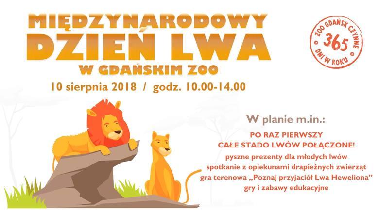 Międzynarodowy Dzień Lwa w gdańskim ZOO już w najbliższy piątek 10 sierpnia. Jakie atrakcje czekają?