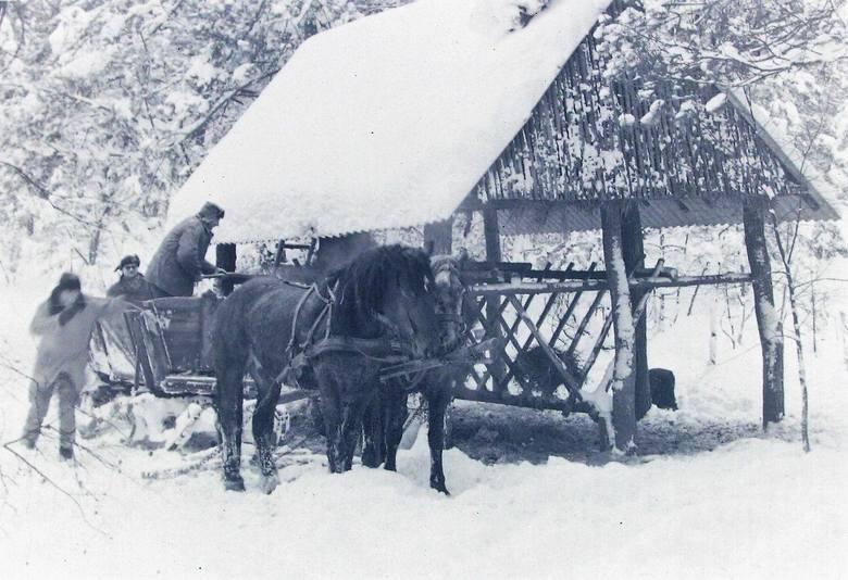 Przy paśniku podczas zimy stulecia pod Słupskiem.