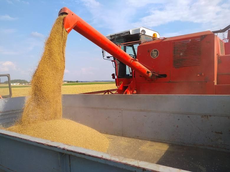 Ceny zbóż tuż po żniwach