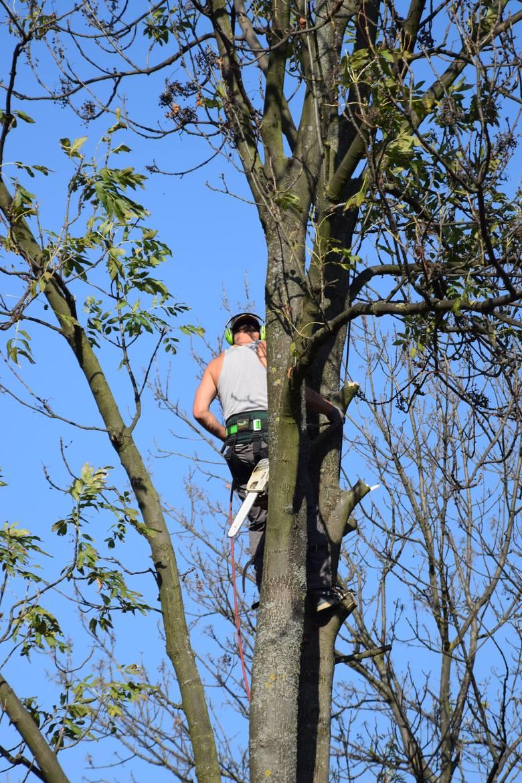 Adam Witek na wysokich drzewach czuje się, jak ryba w wodzie.