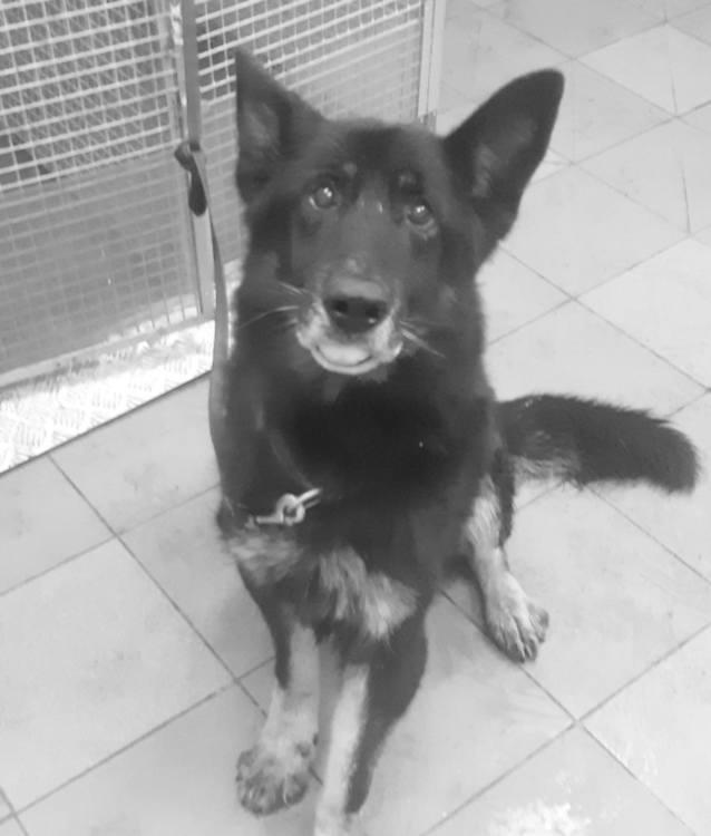 Warszawa: Gorąca woda zalała kojce, nie żyje sześć policyjnych psów [ZDJĘCIA] Veolia chce kupić lub wyszkolić psy dla policji