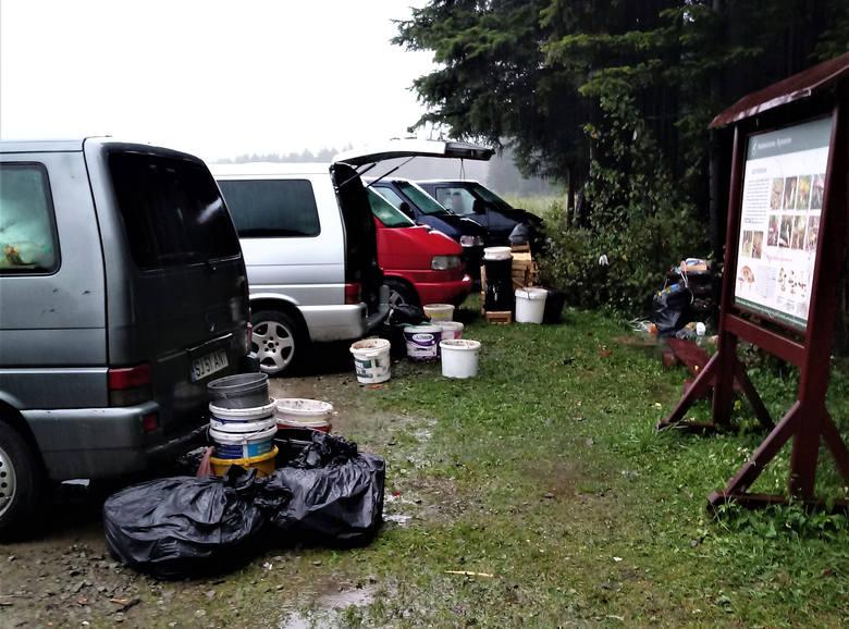 Grzybiarze z Rumunii masowo zbierają grzyby w podkarpackich lasach