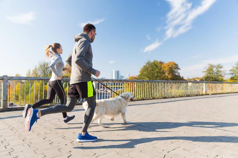 Posiadanie psa w udowodniony sposób zwiększa codzienną ilość aktywności. By zapewnić pupilowi wymaganą porcję ruchu, warto z nim biegać lub jeździć na
