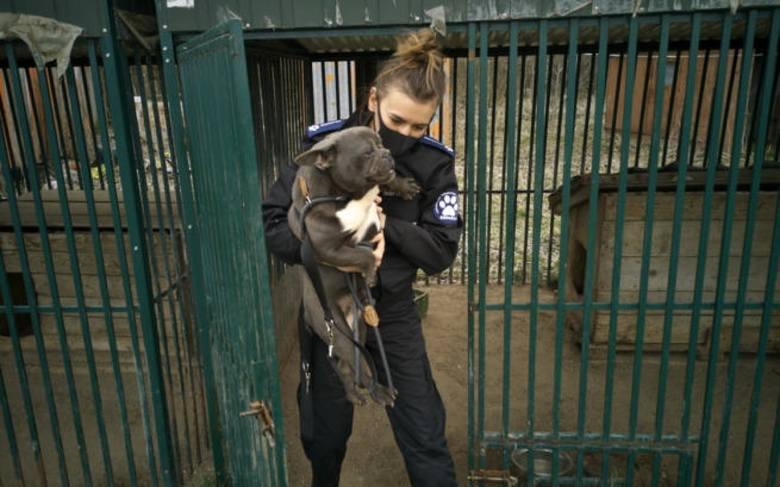 Jest tymczasowy areszt dla właścicieli pseudohodowli psów w Starej Hucie