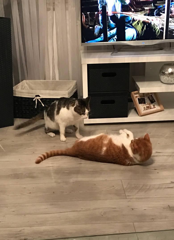 Światowy Dzień Kota. Wysłaliście nam swoje kotki! [GALERIA]