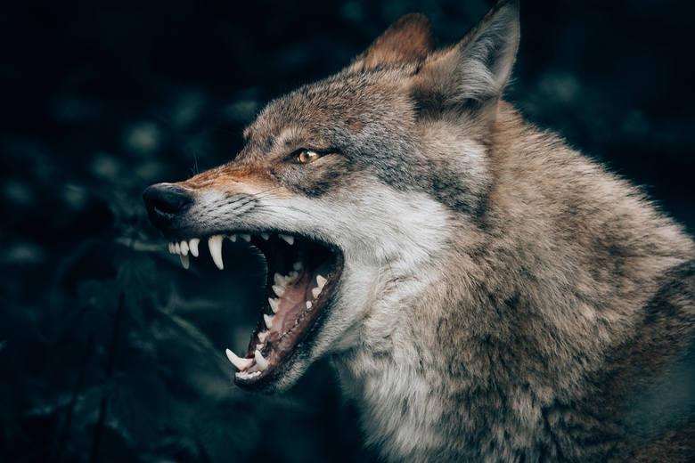 Najbardziej niebezpieczne zwierzęta w Polsce. Spotkanie z nimi może być zabójcze