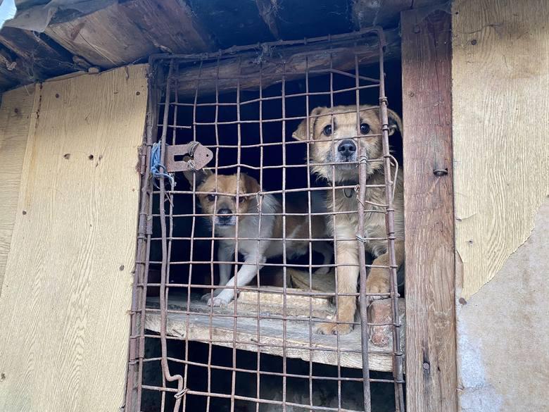 """Ratuj katowane zwierzęta z DIOZ – przekaż 1% podatku"""""""