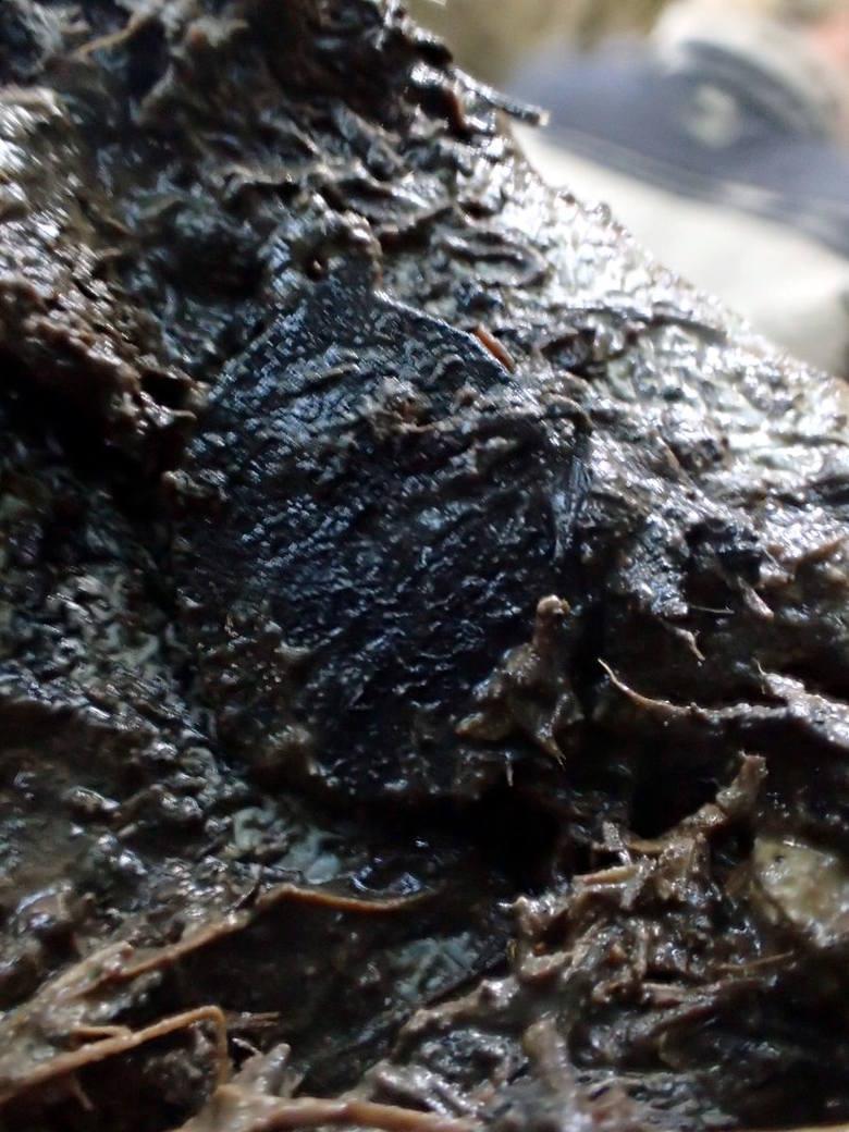 Przedmioty znalezione podczas ekshumacji przy szczątkach.