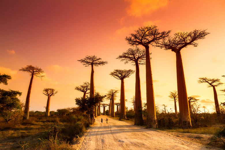 Madagaskar Działalność człowieka - wycinka drzew i kłusownictwo - niszczy lasy Madagaskaru w zastraszającym tempie. Szacuje się, że w ciągu 35 lat znikną
