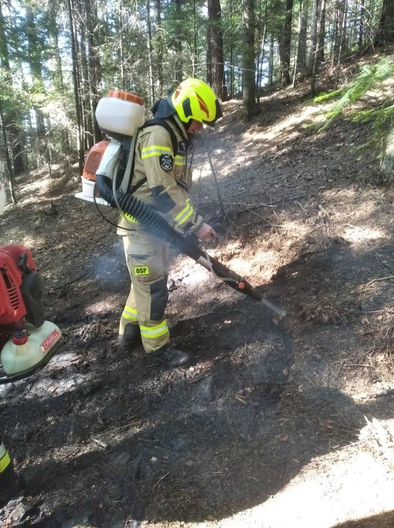 Myślenice. Ogień w lesie w porę zauważony przez spacerowicza