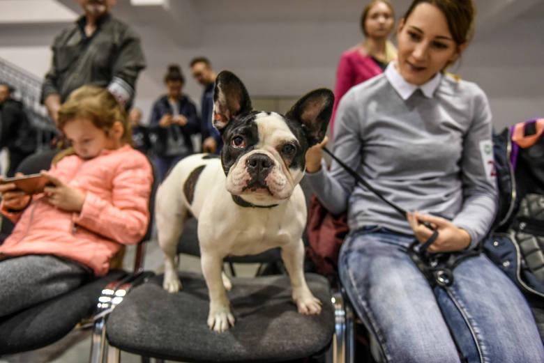 Na Międzynarodowych Targach Poznańskich nie odbędzie się coroczna wystawa psów rasowych.