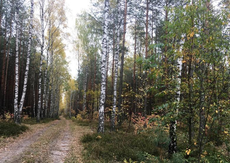 Ostrołęka. Czy w Ostrołęce będzie pachniało jak w lesie?