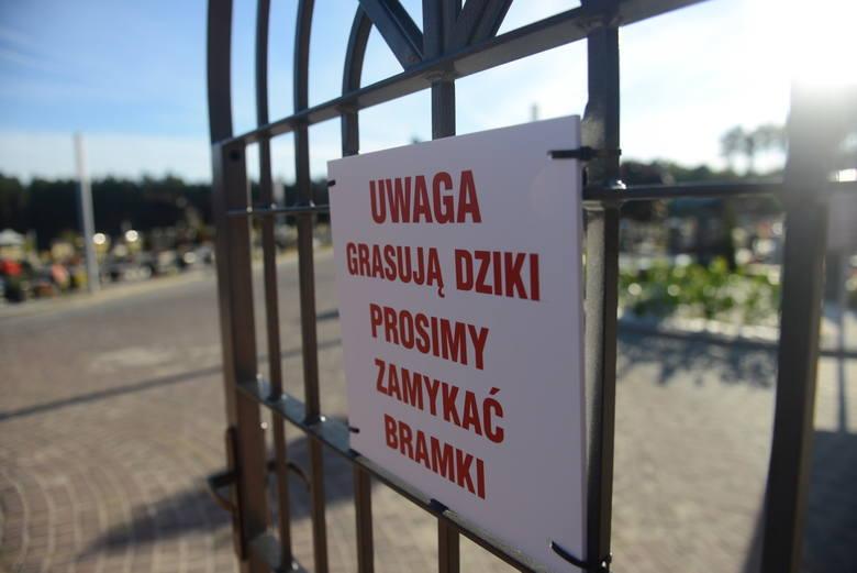 Zielona Góra. Na cmentarzu przy ul. Wrocławskiej rozpoczął się sezon na kradzieże