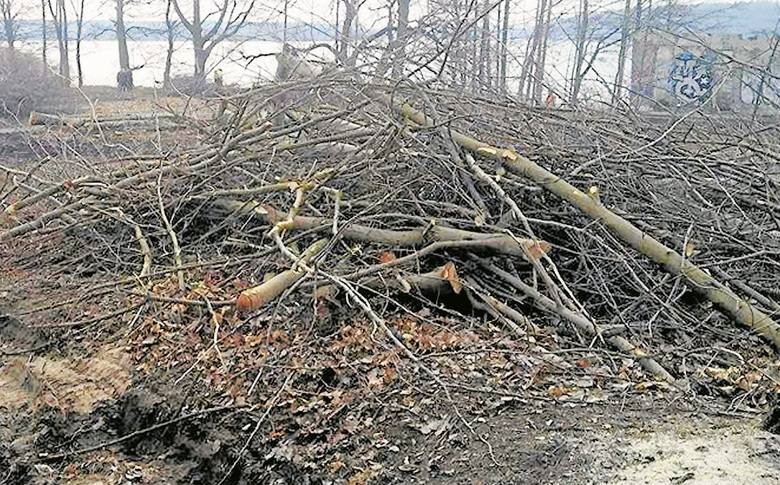 Wycinka drzew: Nowe przepisy 2017. Koniec wielkich żniw pilarzy