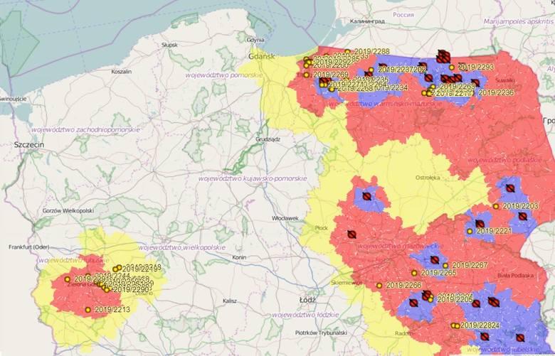 Nowe przypadki ASF na mapie Polski. Kolejne dziki w zachodnich województwach