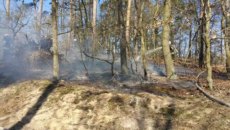 W piątek przed południem w lesie na ulicy Parkowej w Olimpinie (gmina Nowa Wieś Wielka) wybuchł pożar. Z ogniem walczyły trzy jednostki: OSP Brzoza,