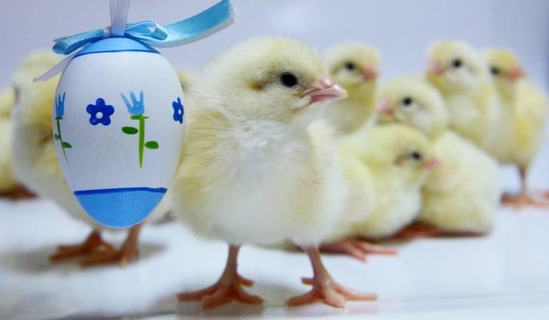Życzenia wielkanocne 2019. Najpiękniejsze życzenia na Wielkanoc 2019. Już wkrótce będziemy obchodzić święta wielkanocne. Na gk24.pl znajdziesz gotowe