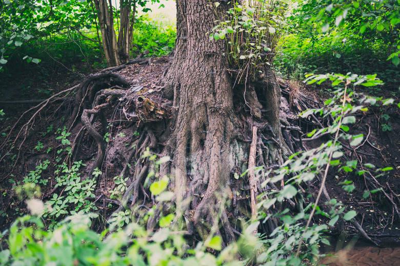 Srebrna meandruje, zaś jej brzegi i bezpośrednią okolicę porastają drzewa z odsłoniętymi korzeniami. Każde takie drzewo zdaje się być cudem natury –
