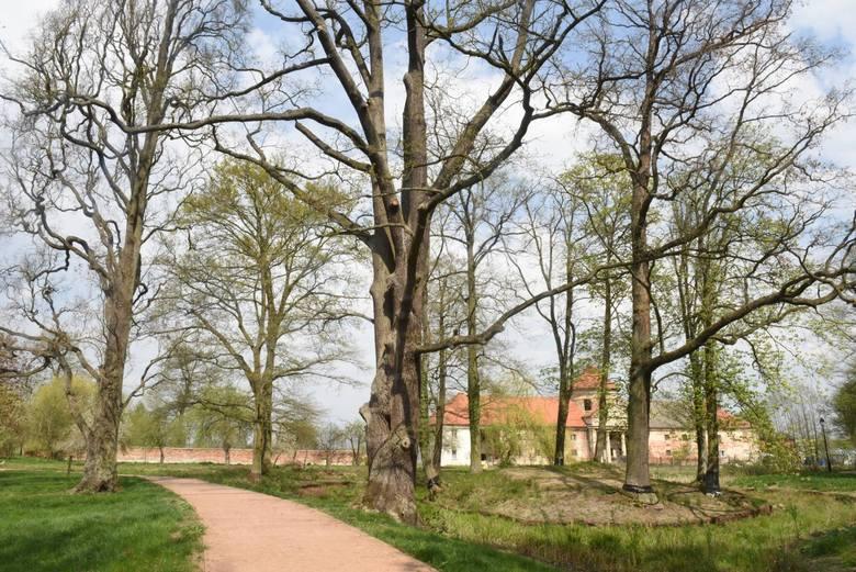 I jeszcze jeden park, tym razem w Laskach