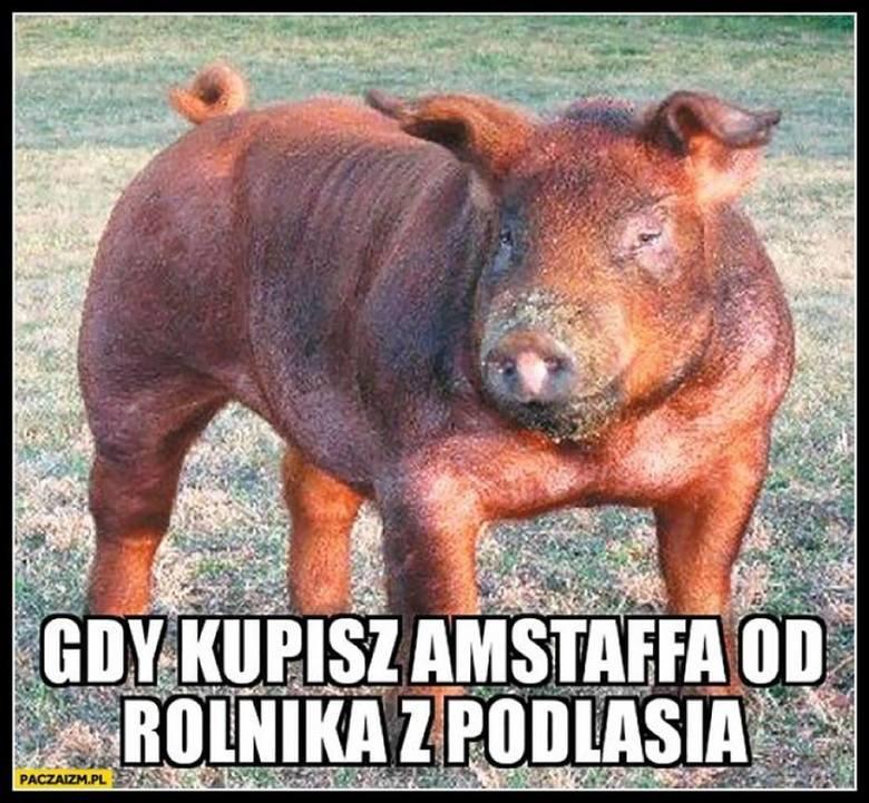 Białystok i Podlasie na śmiesznych obrazkach internautów. Zapraszamy do zestawienia najśmieszniejszych memów z całego regionu.