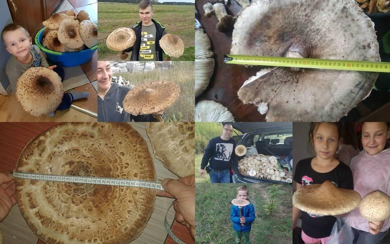 W niedzielę, 29 września 2019, opublikowaliśmy na naszej stronie zdjęcia 30-centymetrowej kani. Na odzew nie trzeba było długo czekać. Otrzymaliśmy od