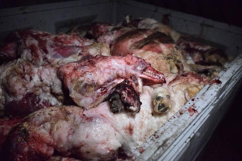 Pokazują przerażające nagrania z uboju lisów i jenotów [UWAGA! DRASTYCZNE ZDJĘCIA]