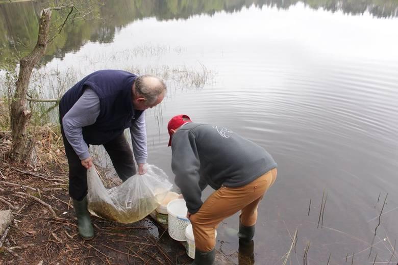 Członkowie PZW zarybili jeziora i rzeki.