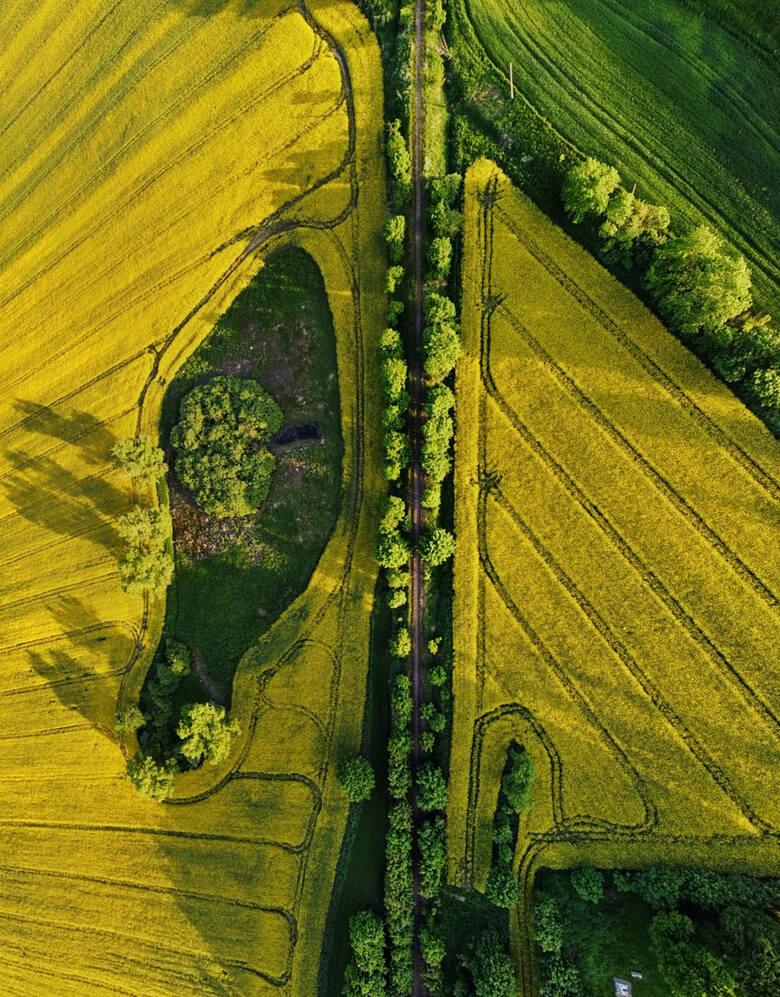 Pola w Mąkowarsku skąpane w rzepaku. Zobacz zdjęcia z drona