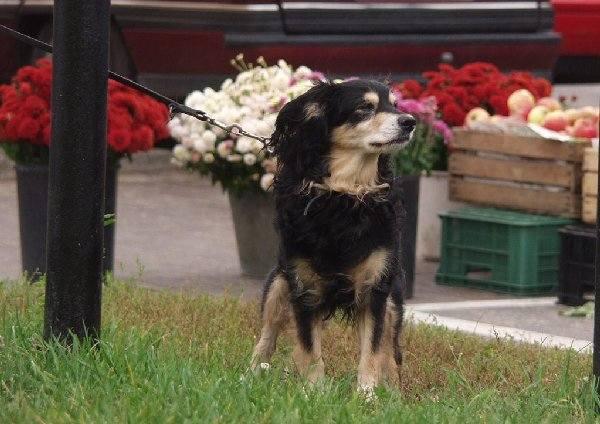 Czy ten pies mieszka w Świeciu legalnie?