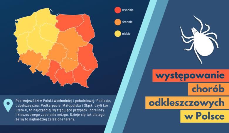 Tu jest najwięcej kleszczy w Polsce - uważaj, by się nie zarazić!
