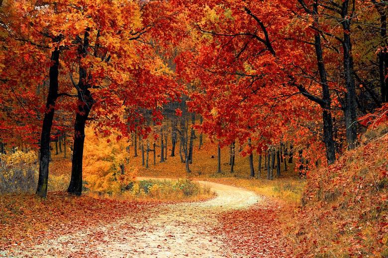 Pogoda na wrzesień i całą jesień. Długoterminowa prognoza pogody na dwa najbliższe miesiące. Co nas czeka? [12.09.19]
