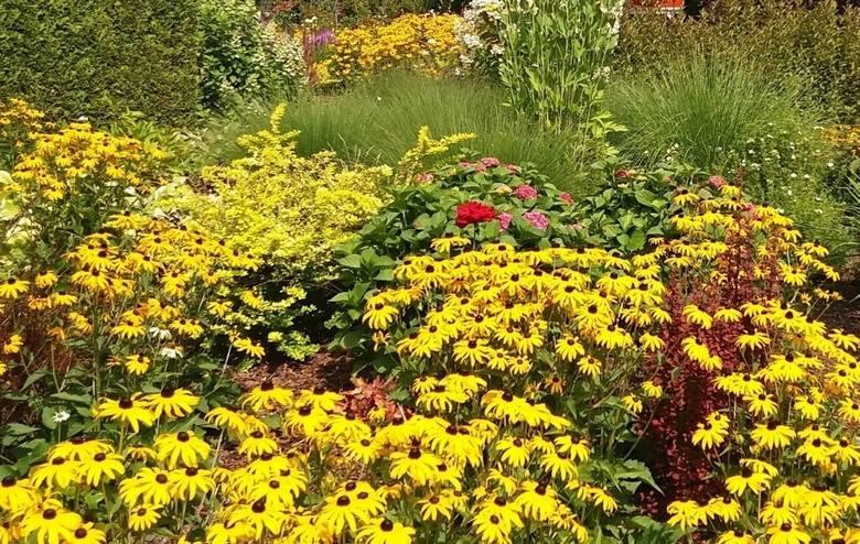 Żółte kwiaty pasują do każdego ogrodu. Ten kolor kwiatów wyraźnie odcina się od zieleni liści i łodyg, więc już niewielka ich ilość jest dobrze widoczna.