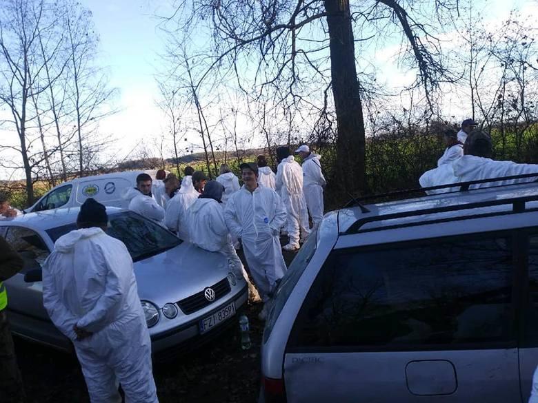 W lubuskich lasach trwają poszukiwania martwych dzików. Na zdjęciu poszukiwania w okolicy Kargowej. Uczestniczyło w nich około 130 osób.