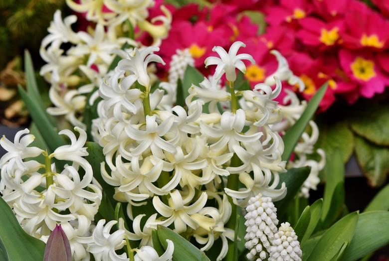 Większość kwiatów balkonowych jest wrażliwych na chłód i lepiej ich nie sadzić przed 15 maja. Przyjmuje się, że to tego czasu mogą zdarzać się w polskim