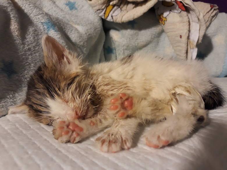 Tym zwierzakom pomagali wolontariusze Fundacji Fioletowy Pies. Setki czworonogów dostały dzięki nim drugie życie.