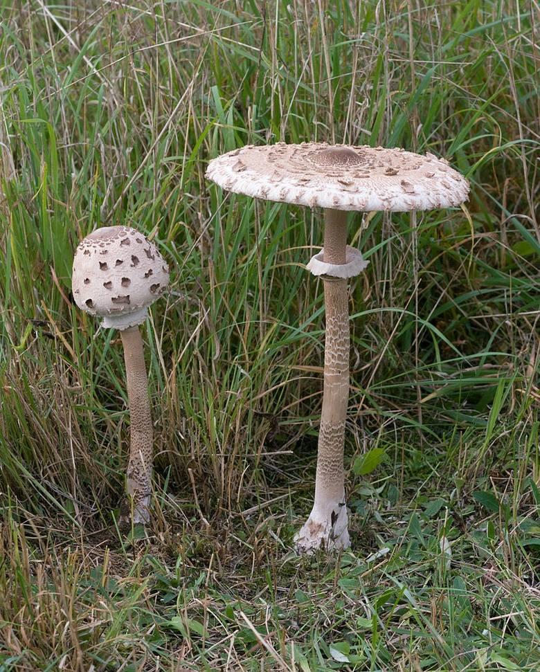 Grzybobranie 2020. Mapa grzybów w Lubuskiem. Gdzie zbierać? Jak rozpoznać jadalne grzyby? Co robić w przypadku zatrucia?