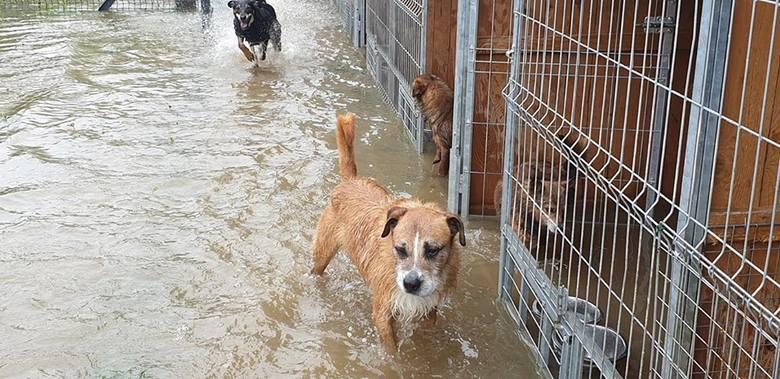 Dramatyczna sytuacja w schroniskach dla zwierząt. W Wadowicach Dolnych k. Mielca zostało całkowicie zalane [ZDJĘCIA]