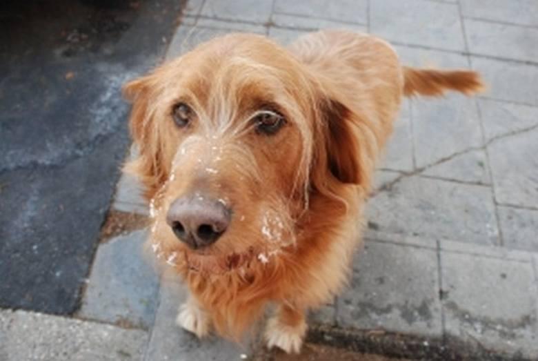 Niemcy ostrzegają przed kupowaniem zwierząt na polskich bazarach, bo często są one chore.
