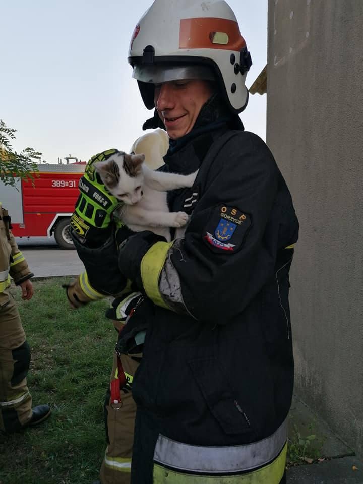 Strażacy z Gorzyc ratowali przestraszonego kota. Udało się (ZDJĘCIA)