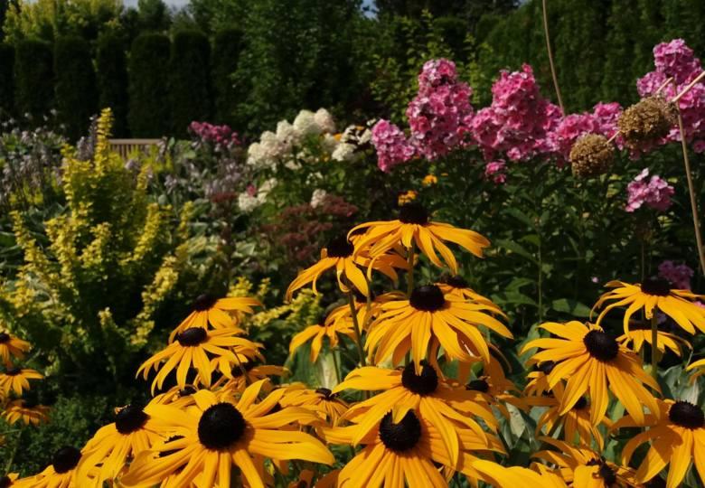 We wrześniu sadzi się wiele roślin, które będą zdobić ogród od wczesnej wiosny do jesieni.