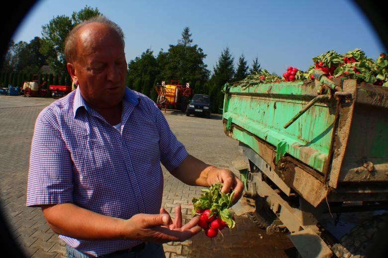 Zdzisław Wawrzyńczyk z Nowego Miasteczka jest największym producentem rzodkiewek w Polsce.